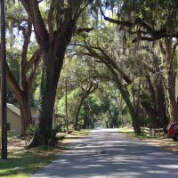 canopy road, Park Ave, DeLeon Springs (3-19-2011), Тик