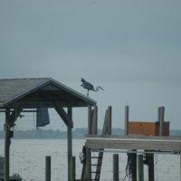 Bird, Титусвилл