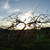 Through the Vines, Трайлер-Эстатс