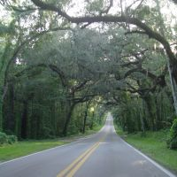 one of the nicest canopy roads in Florida, Fort Dade ave (8-2009), Трежа-Айленд
