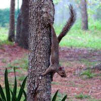 Squirrel (07/2012), Форест-Сити