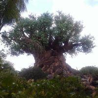 The Tree of Life, Форест-Сити
