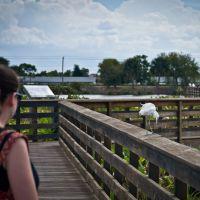 Wakodahatchee Wetlands, 13026 Jog Rd, Delray Beach, FL 33446, Хай-Пойнт