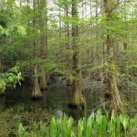 Swamp, Хамптон