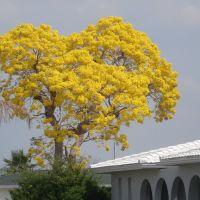 BLOOMING TREE, Шарлотт-Харбор