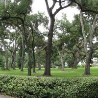 Beautiful live oaks, Эджвуд