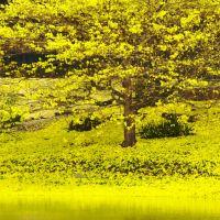 Springtime on Lake Gem Mary, Эджвуд