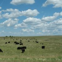 Cows and clouds on 83, Ватертаун
