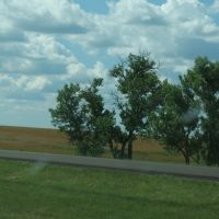 Trees before Draper, Сиу-Фоллс