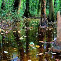 Swamped, Вест-Колумбиа