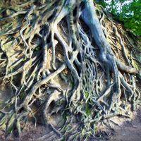 Roots at Liberty, Гринвилл
