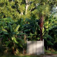 Simply Bananas Banana Plantation Charleston, SC, Джеймс-Айленд