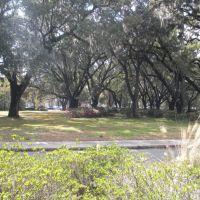 James Island oak trees, Джеймс-Айленд