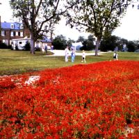 Landschaft bei Charleston/South Carolina, Джеймс-Айленд