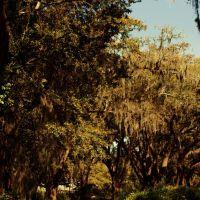 Spanish Moss, Джеймс-Айленд