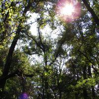 Congaree National Park, Форест-Акрес