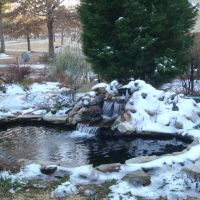 Koi Pond in Winter, Форест-Акрес