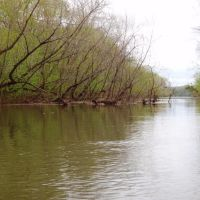 Island side channel -The old channel of Sandy Run Creek, Форест-Акрес