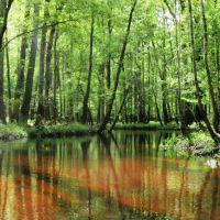Brackish Cedar Creek, Форест-Акрес