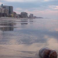 Tidewater Jellyfish, Хемингуэй
