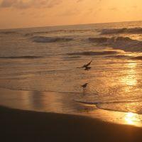 Sunrise, near Myrtle Beach, S.C., Хемингуэй