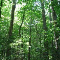 High canopy (May 2008), Чарльстон