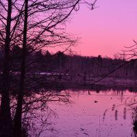 Duffies Pond, near Congaree National Park, Columbia, SC, Чарльстон