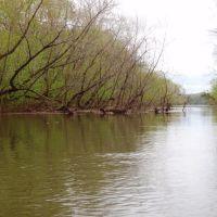 Island side channel -The old channel of Sandy Run Creek, Чарльстон