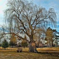 Park Bench, Вашингтон-Террас