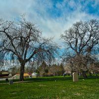 Cemetery Trees, Вашингтон-Террас