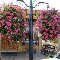 Vernal Flowers 10 05 08, Вернал