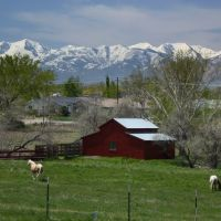 Barn and Horses, Мидвейл