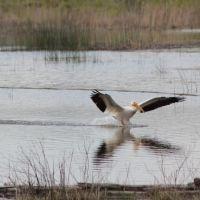 Pelican Landing, Мидвейл