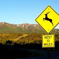 Deer Warning, Монтичелло