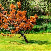 Rusted Pine, Муррей