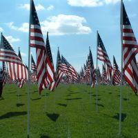 Flags 9-11, Санди