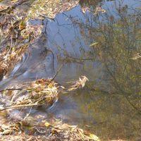 beaver pond, Саут-Солт-Лейк