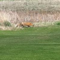 Meadow Brook Golf Course Fox, Тэйлорсвилл