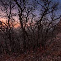 mount olympus scrub oak, Холладей