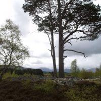 Ring cairn, Авимор