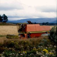 Cutting wheat, Aviemore, Scotland., Авимор