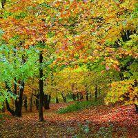 Autumn, Аккрингтон