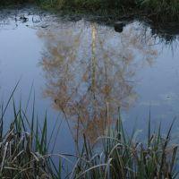 Reflected tree, Андовер