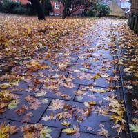 Fallen Leaves, Банбери