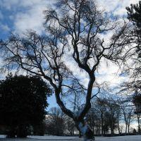 Winter tree, Барнсли