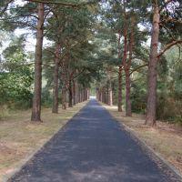 Brookwood War Cemetery entrance, Басингсток