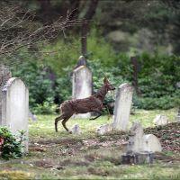 Brookwood cemetery, Басингсток