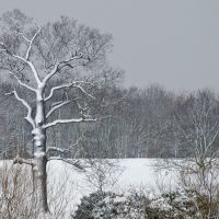 Snow in Danson Park, Бексли