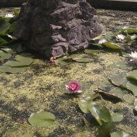 Pond in Danson park, Бексли