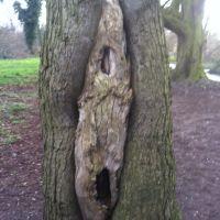 Tree, Бексли